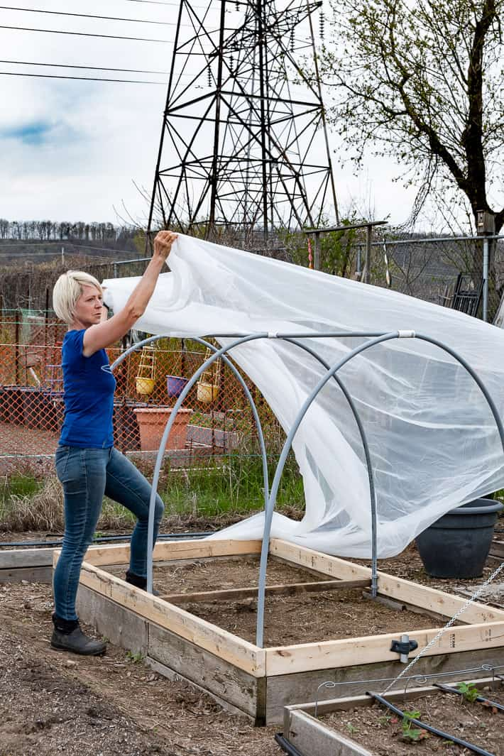 Laying lightweight insect netting over the frame of a hinged hoop house in a large garden.