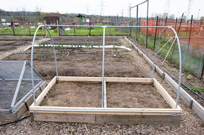 Completed hinged hoop house in a large community garden, waiting for the last step, placing insect netting around it.