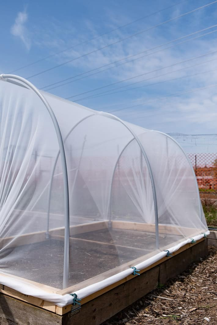 Hinged hoop house sits on raised bed in large garden with blue skies in the background.