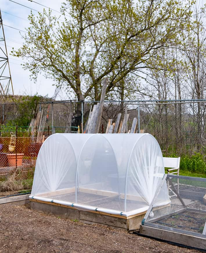 The best defence against cabbage moth and other insects, a hinged hoop house sits in a large garden plot waiting to be planted with vegetables.