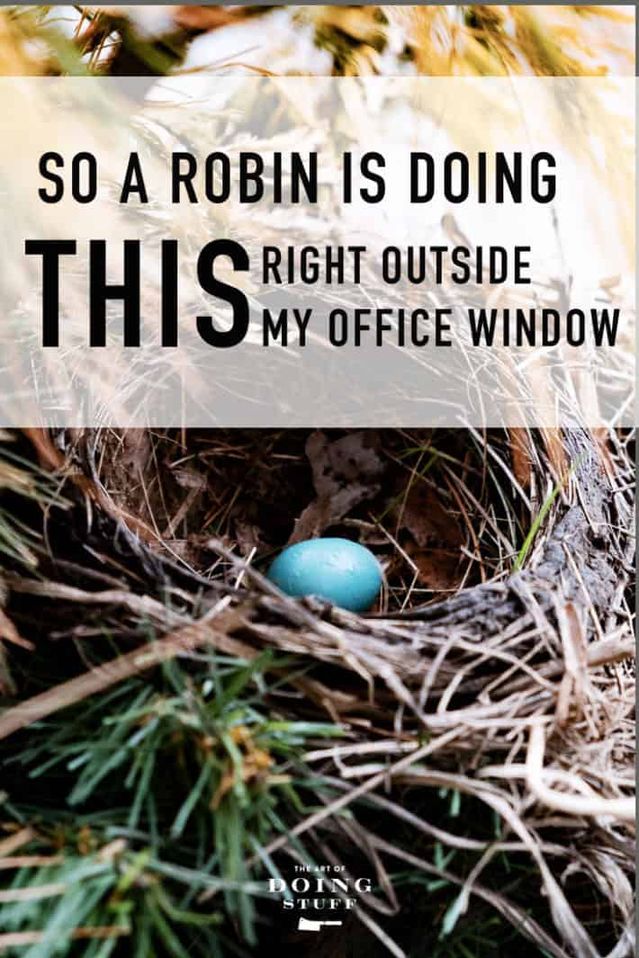 Honestly.  Like Instagram isn\'t enough of a distraction, a robin goes building a nest RIGHT outside my home office window. So of course I trained a video camera right on it ...