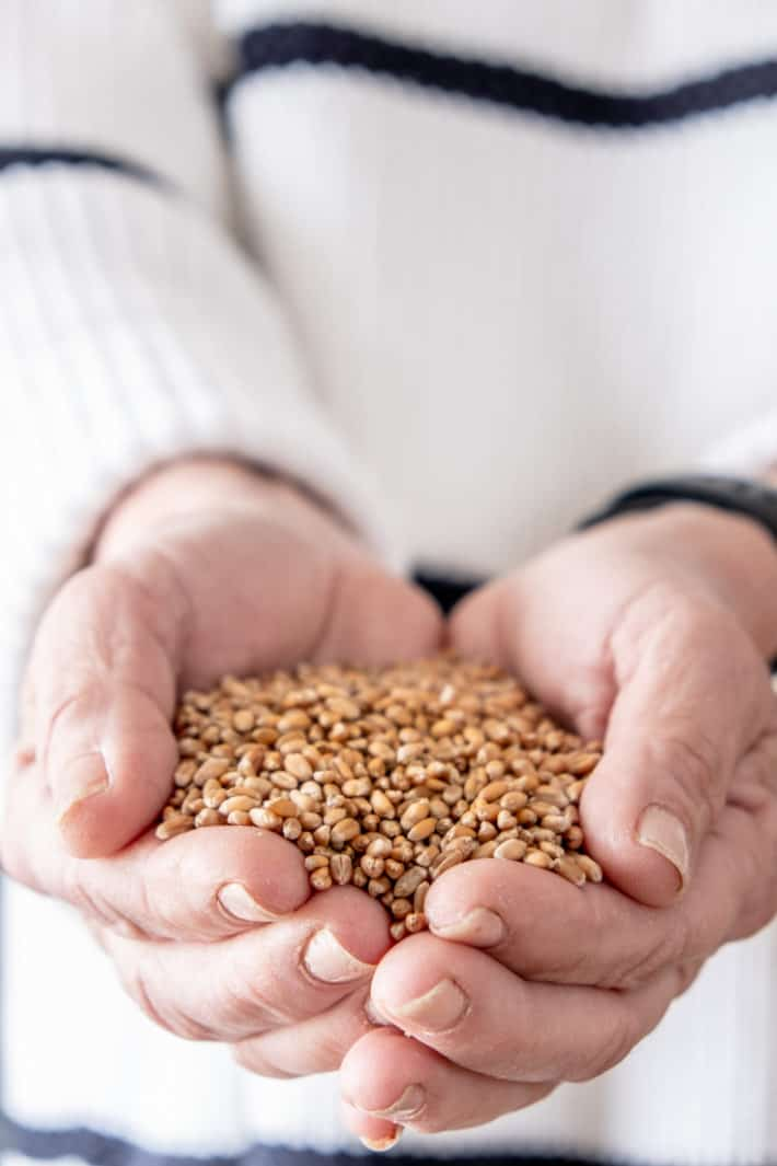 Home grown wheat berries are held in the palms of a woman's hand.