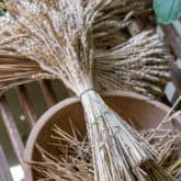 How to Grow & Harvest Wheat on a Small Scale.