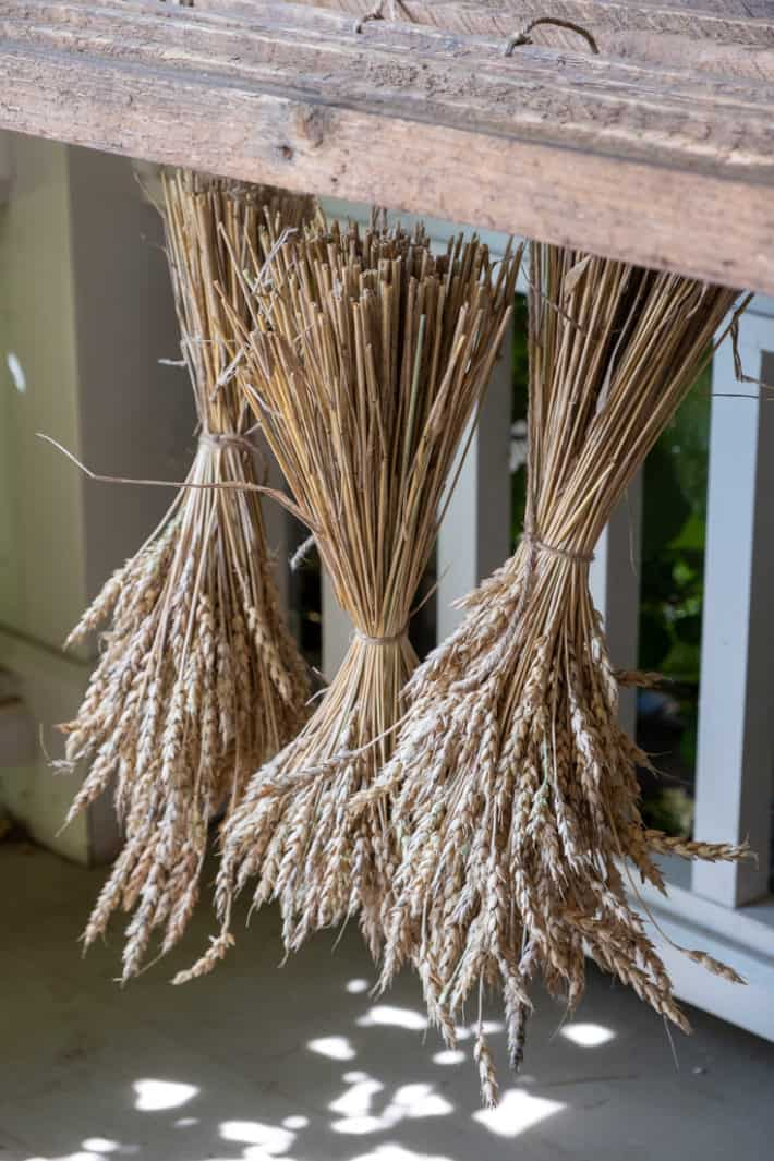 Home grown wheat made into sheaves, left drying in a protected area under a drying rack.