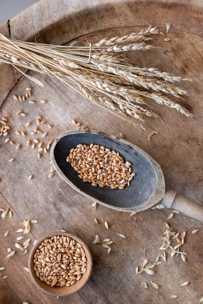 A spray of wheat laying on top of a large round wood platter along with an antique wood spoon filled with wheat berries.