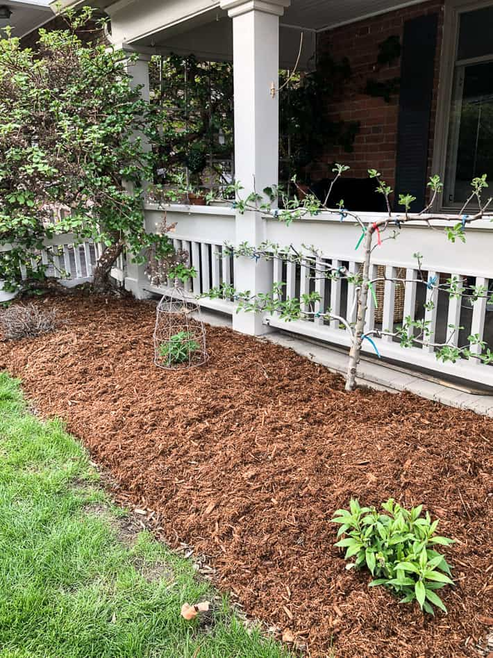Front porch of a heritage home with newly mulched garden bed and espaliered apple tree.