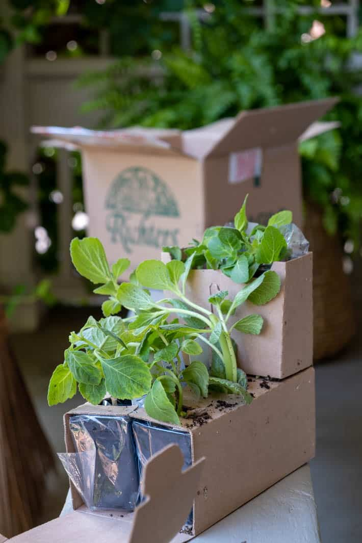 Elaborate cardboard packaging used for shipping live plants keeps them upright, moist and healthy.