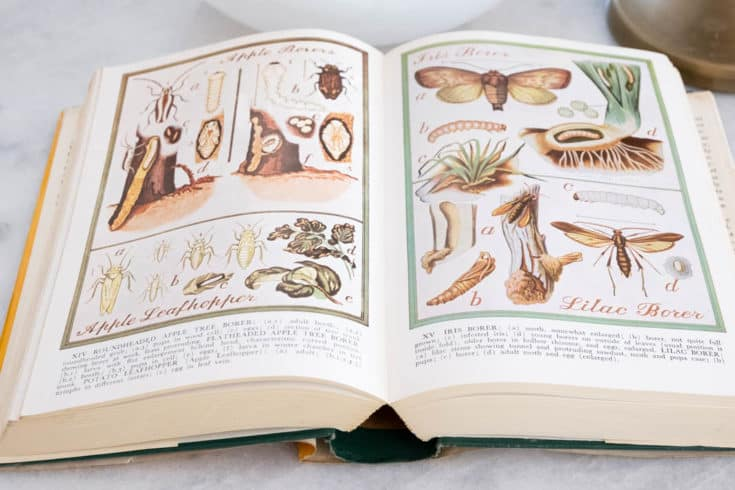 Open book showing elaborate insect illustrations sitting on marble counter top.
