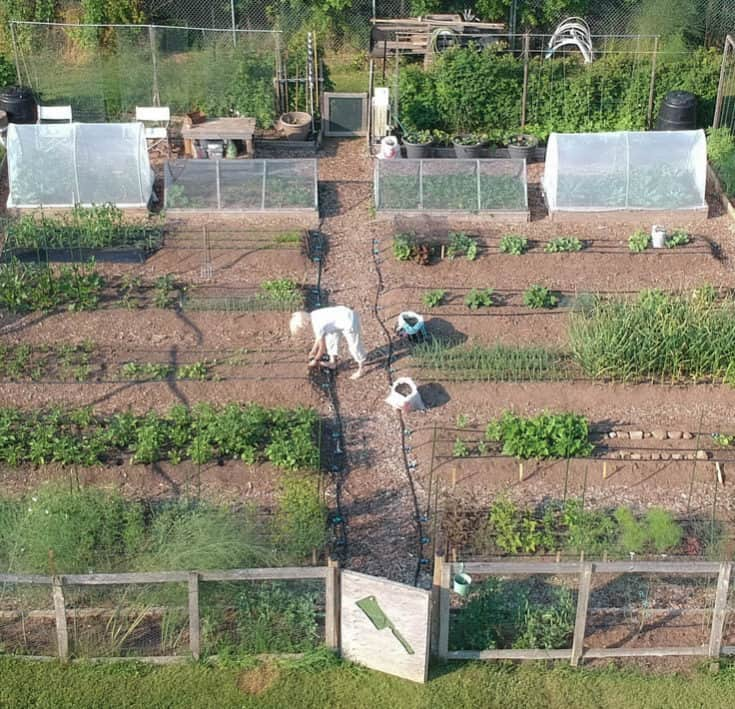 Overhead drone view of Karen Bertelsen working in the raised beds of her community garden.