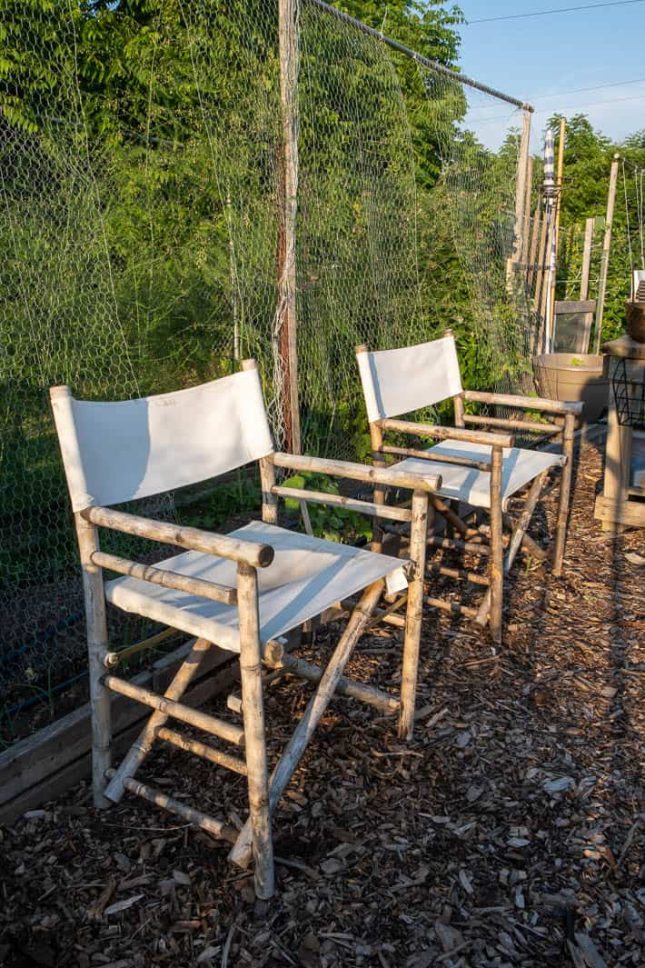 Beige canvas director's chairs sitting on mulch path in vegetable garden.