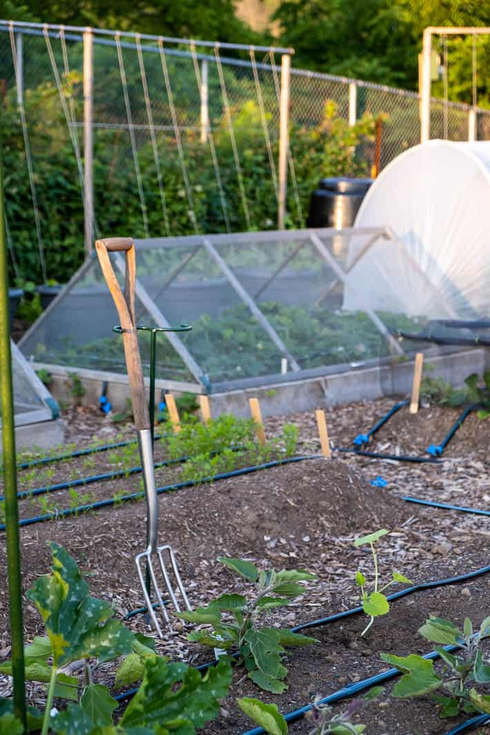 Drip irrigation system placed along beds with hinged-hoop house in background and garden fork in the foreground.