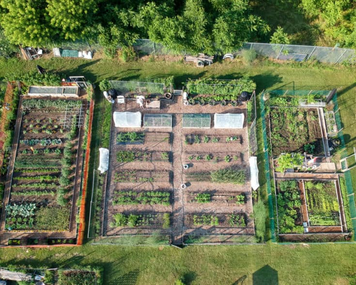 Overhead drone shot of Karen Bertelsen's community garden. Also shows neighbour's plot to the left.