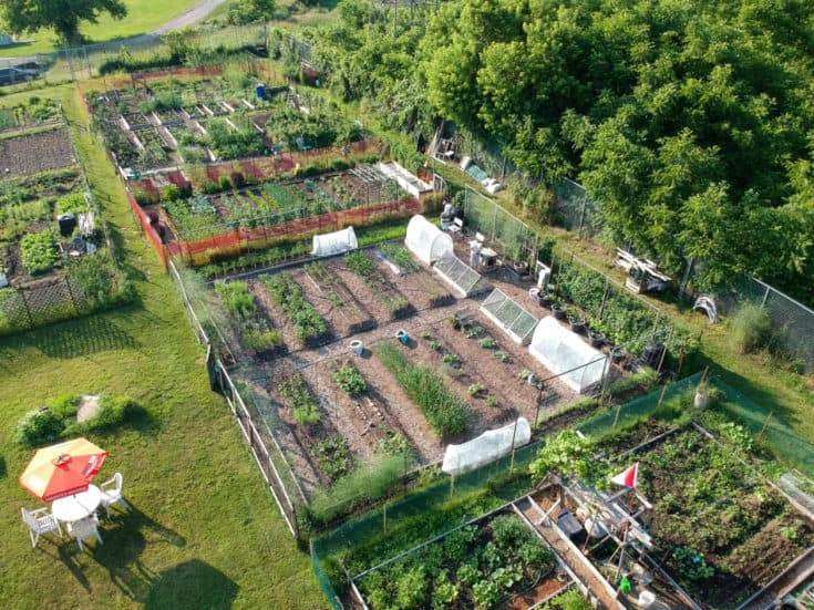 Long overhead shot of Karen Bertelsen's community garden next to lush conservation area.