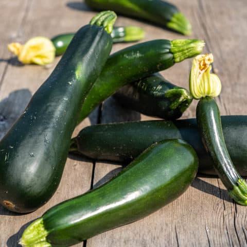 How to Grow Zucchini Plants
