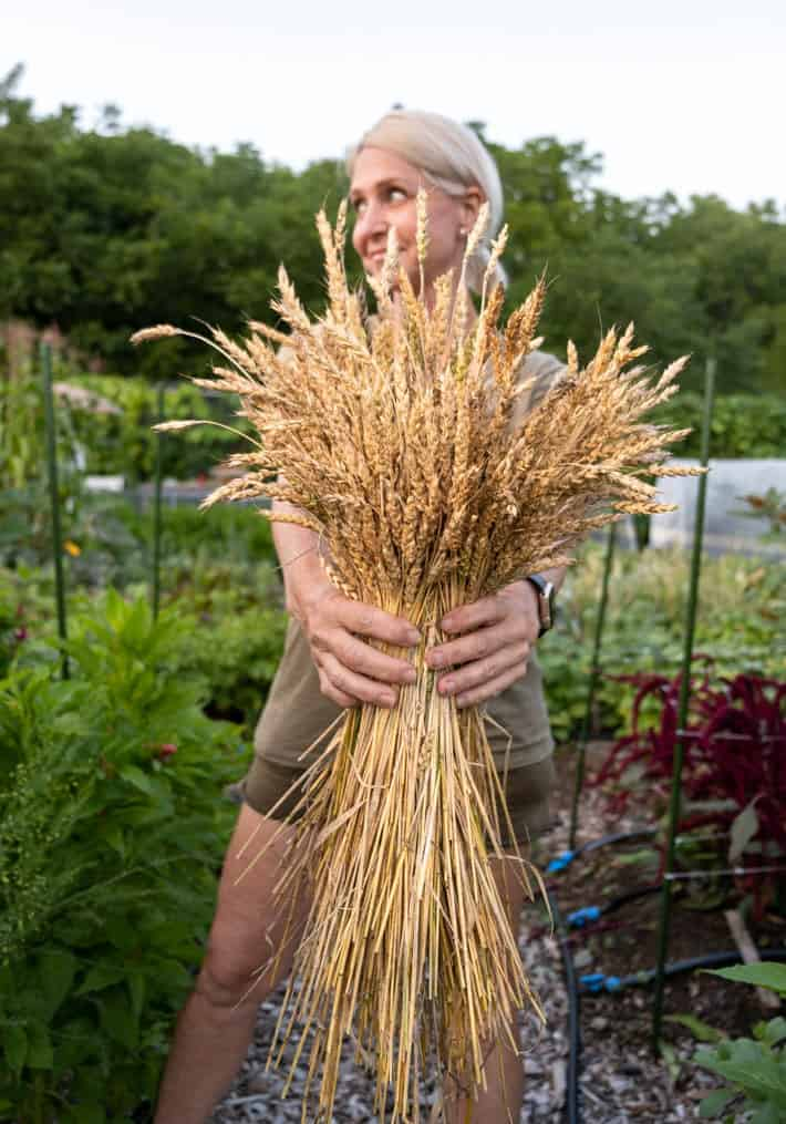 Karen Bertelsen holds an armful of red fife wheat grow in a community garden.