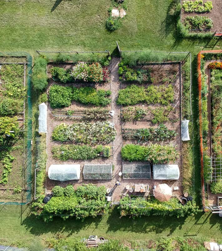 Overhead drone shot of Karen Bertelsen's community vegetable plot.