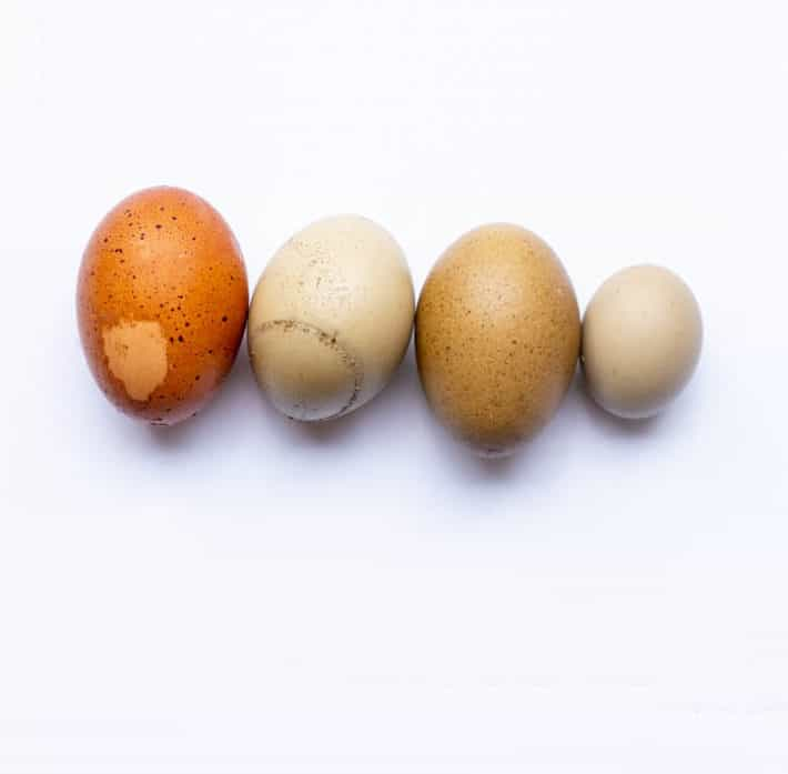 Four eggs in a row on a white background. The left-most is a blotched egg, the next is a mended egg and the next two are speckled eggs.