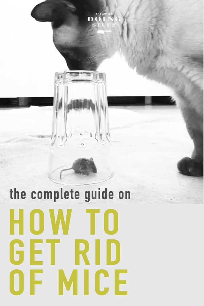 The Complete Guide on How To Get Rid of Mice.
