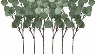 Eucalyptus pick. Set of 6.