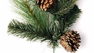 Pine pick. Set of 6