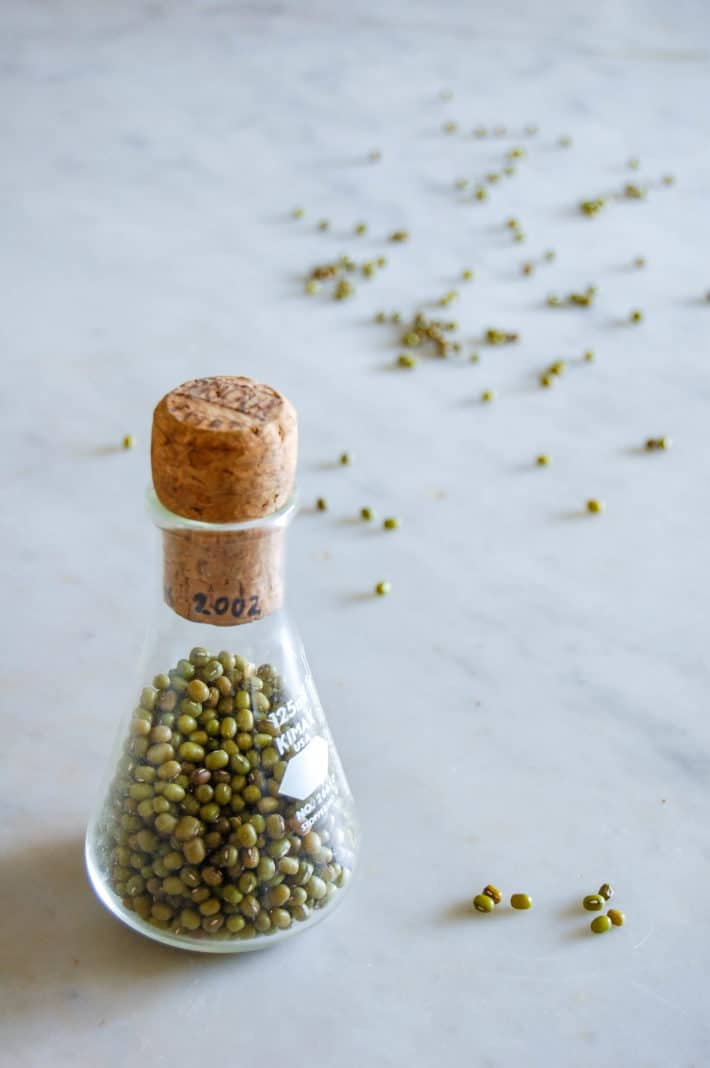 Mung bean seeds in a glass beaker with cork for storage.
