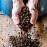 Grow Better Plants with Homemade Potting Soil