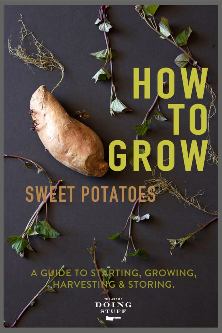 A DIY Guide to Growing Sweet Potatoes.