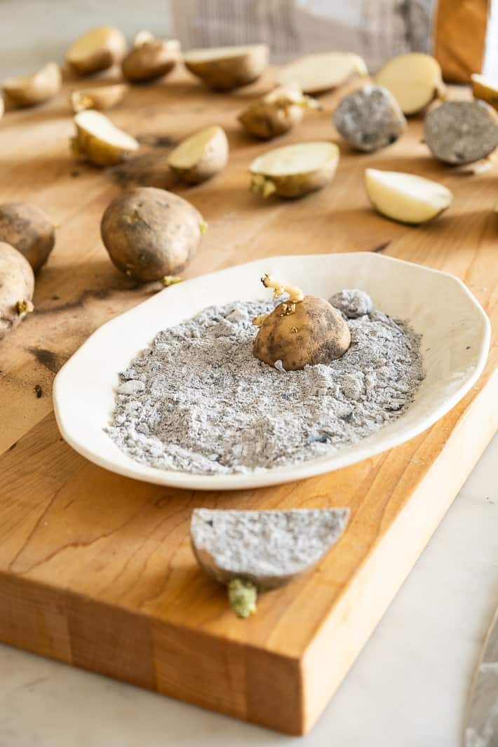 Seed potatoes being dipped in wood ash to dry them out after cutting.