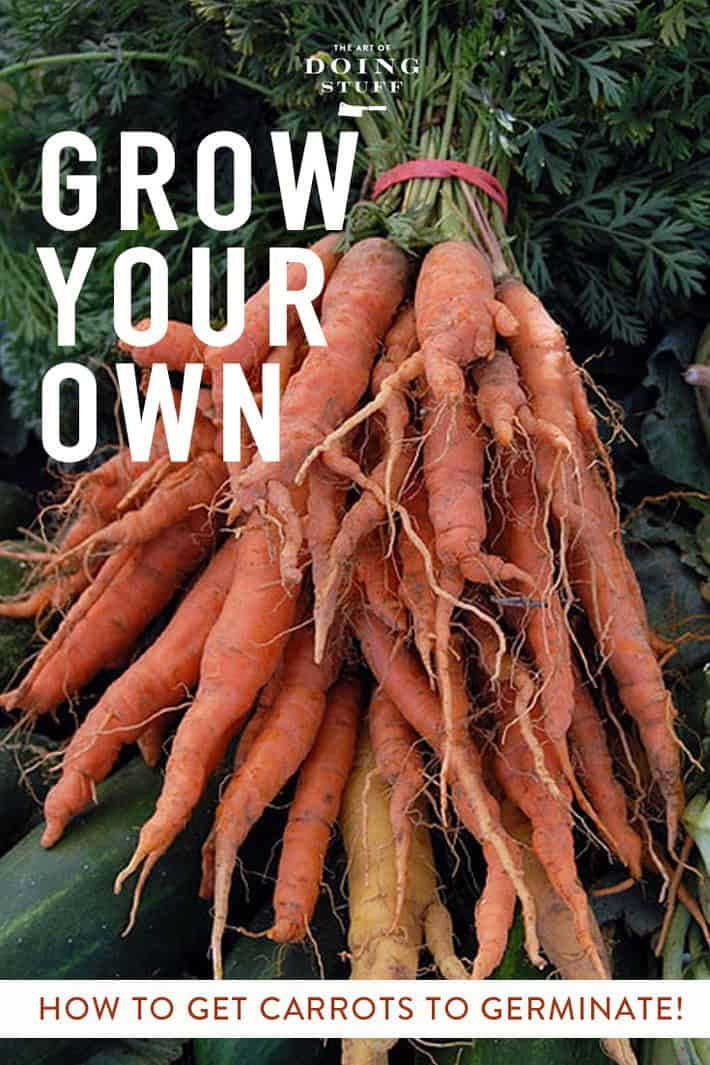 How to Successfully Grow Carrots