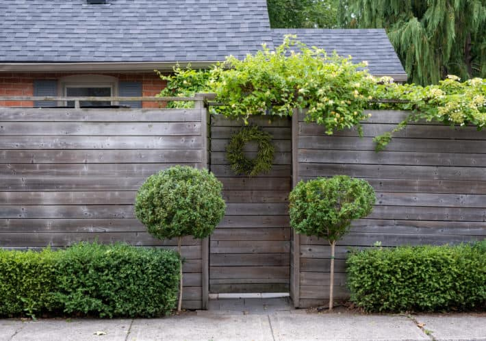 """Two Boxwood topiaries flank a gate entrance with a 12"""" seed pod wreath hanging on the gate."""