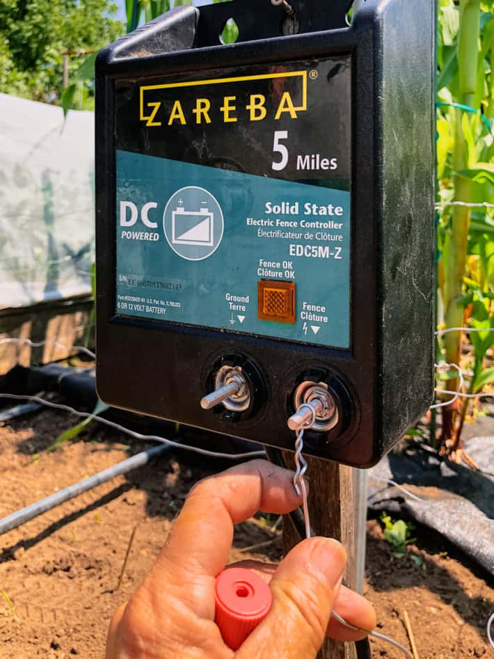 Twisting wire around the positive terminal of a battery operated Zareba fence charger.