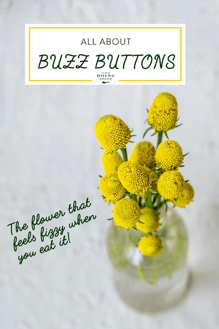 Buzz Button. The Flower that Tastes Fizzy.