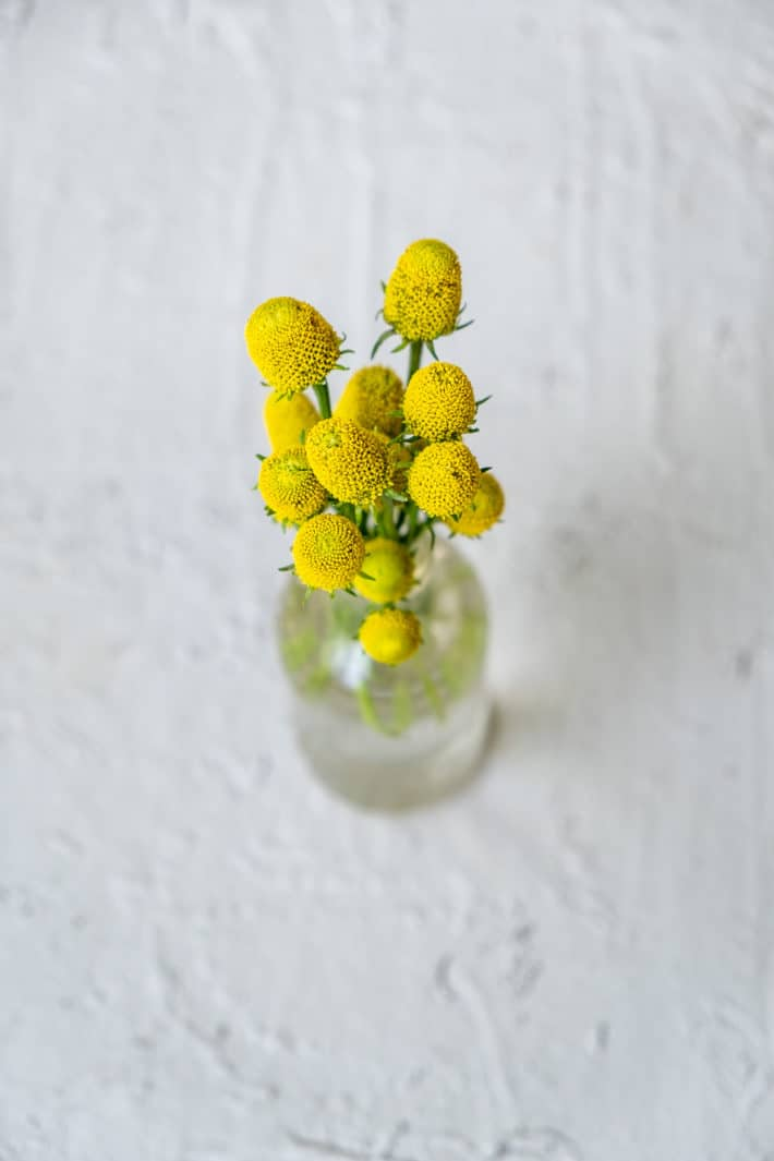 Several yellow Buzzbutton flowers in a little glass vase on white background.